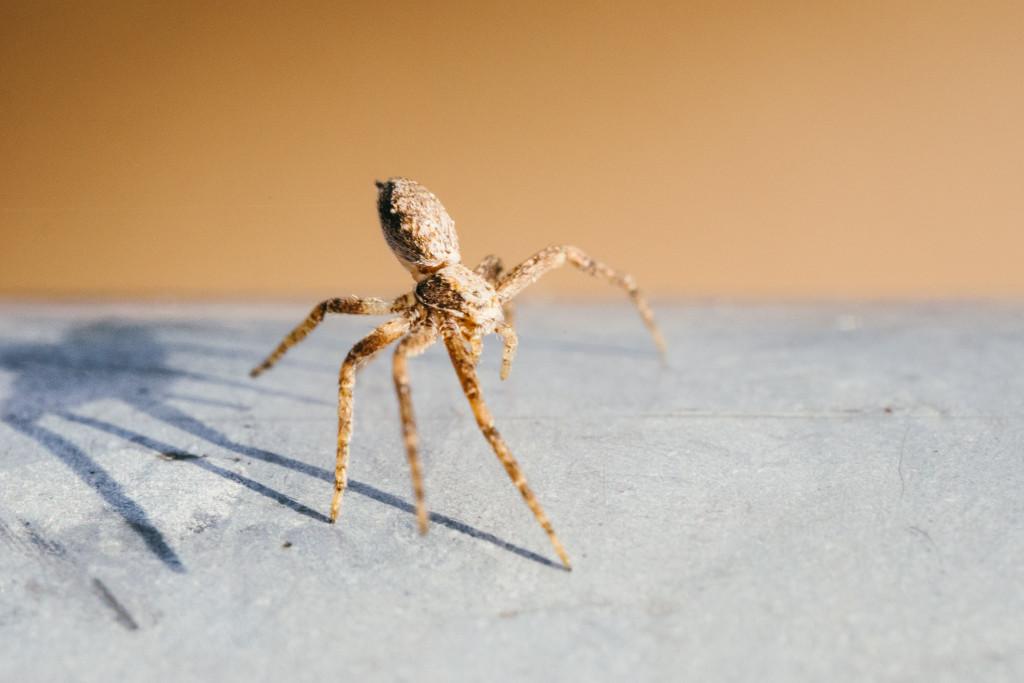 Die Spinne machte sich vor mir groß, ich machte einen Schnappschuss, sah den Schatten, wollte den Bildausschnitt ändern – Da war die Spinne schon vom Geländer gesprungen.