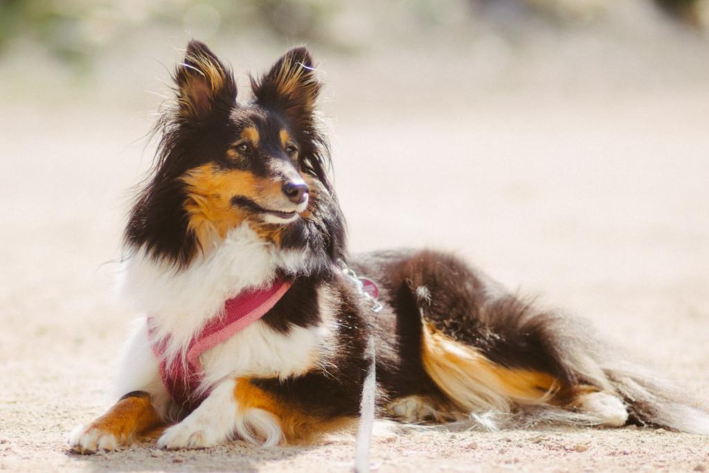 Hund - Canon 85/1.8 an mFT mit Blende