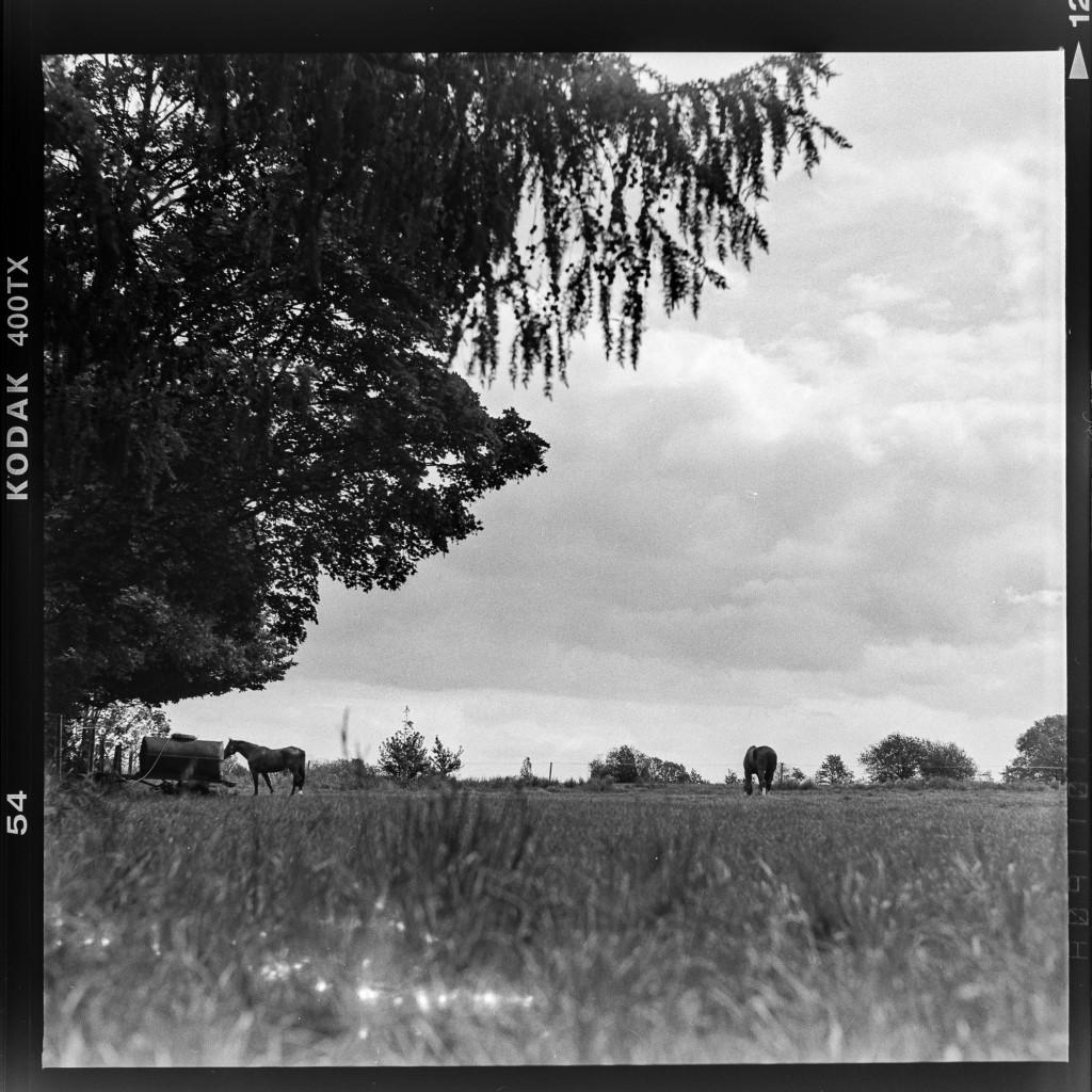 Kodak Tri-X 400 - Pferde