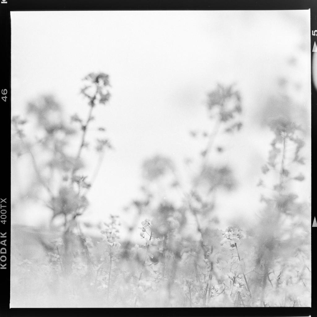 Kodak Tri-X 400 - Raps