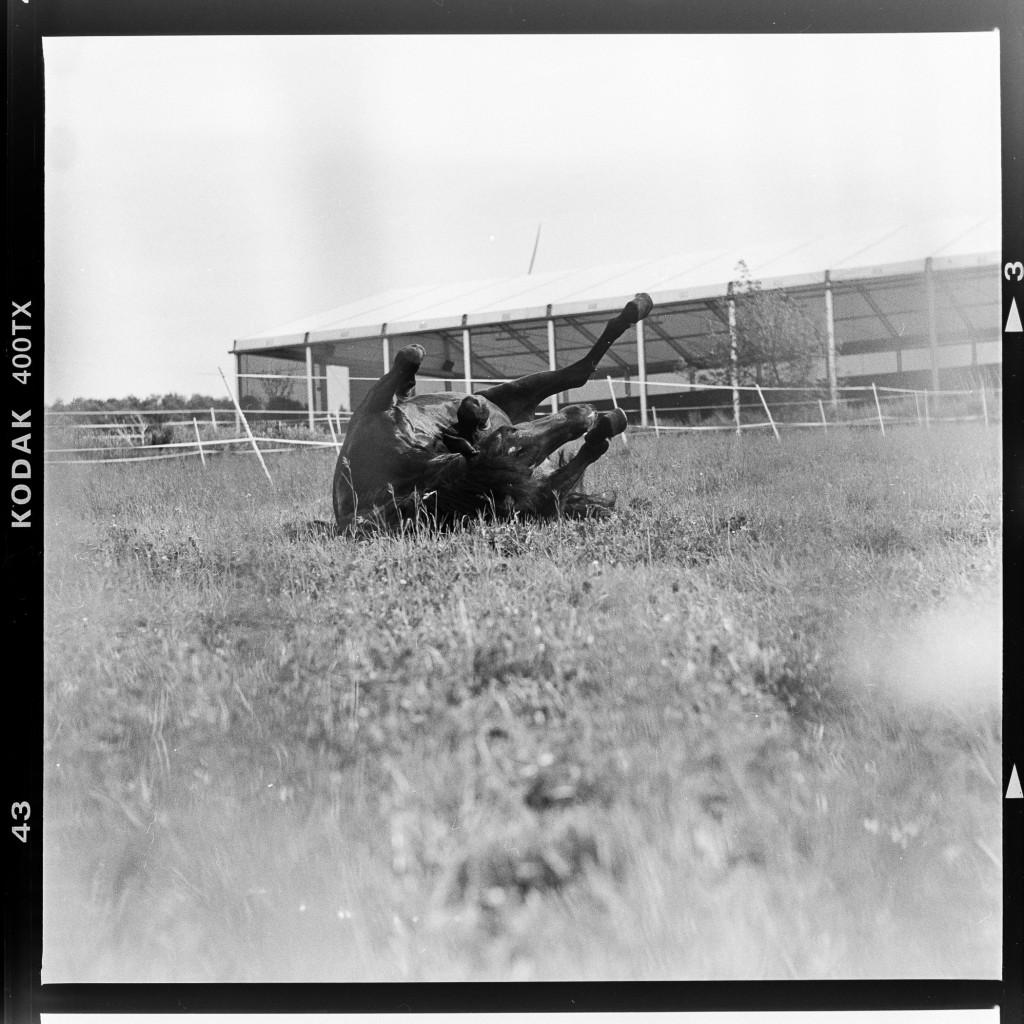 Kodak Tri-X 400 - Pferd