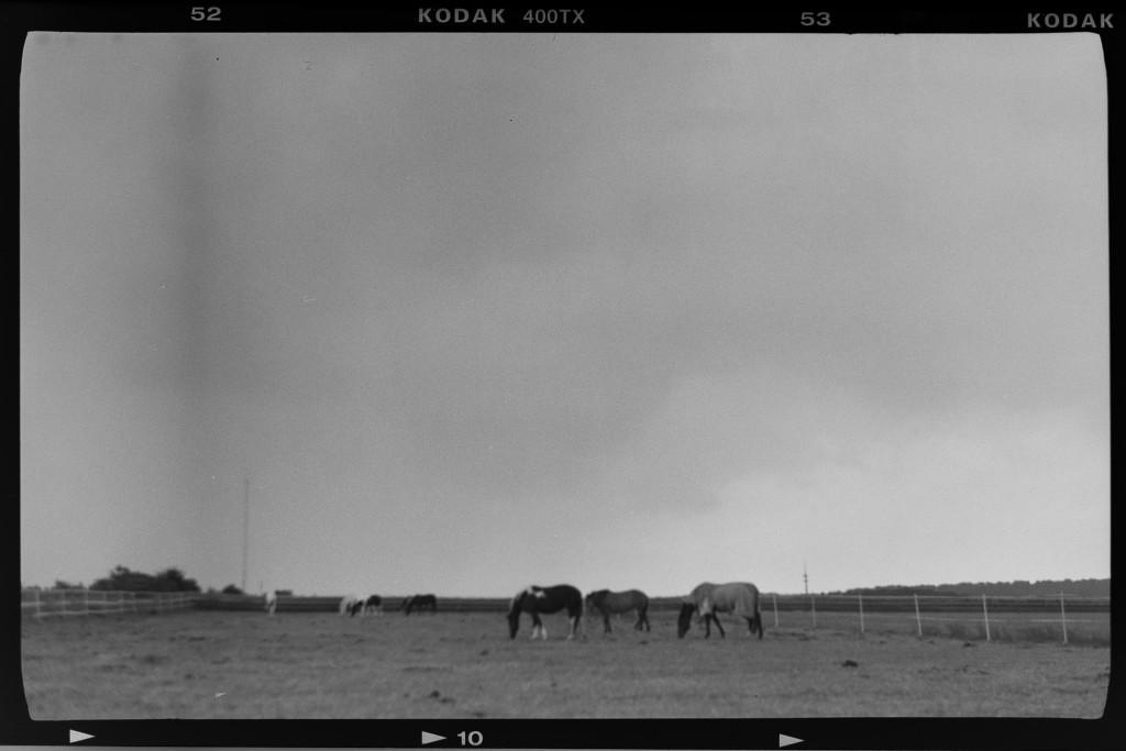 Pferde – Voigtländer Bessa mit Tri-X 400. Entfernung geschätzt / verschätzt