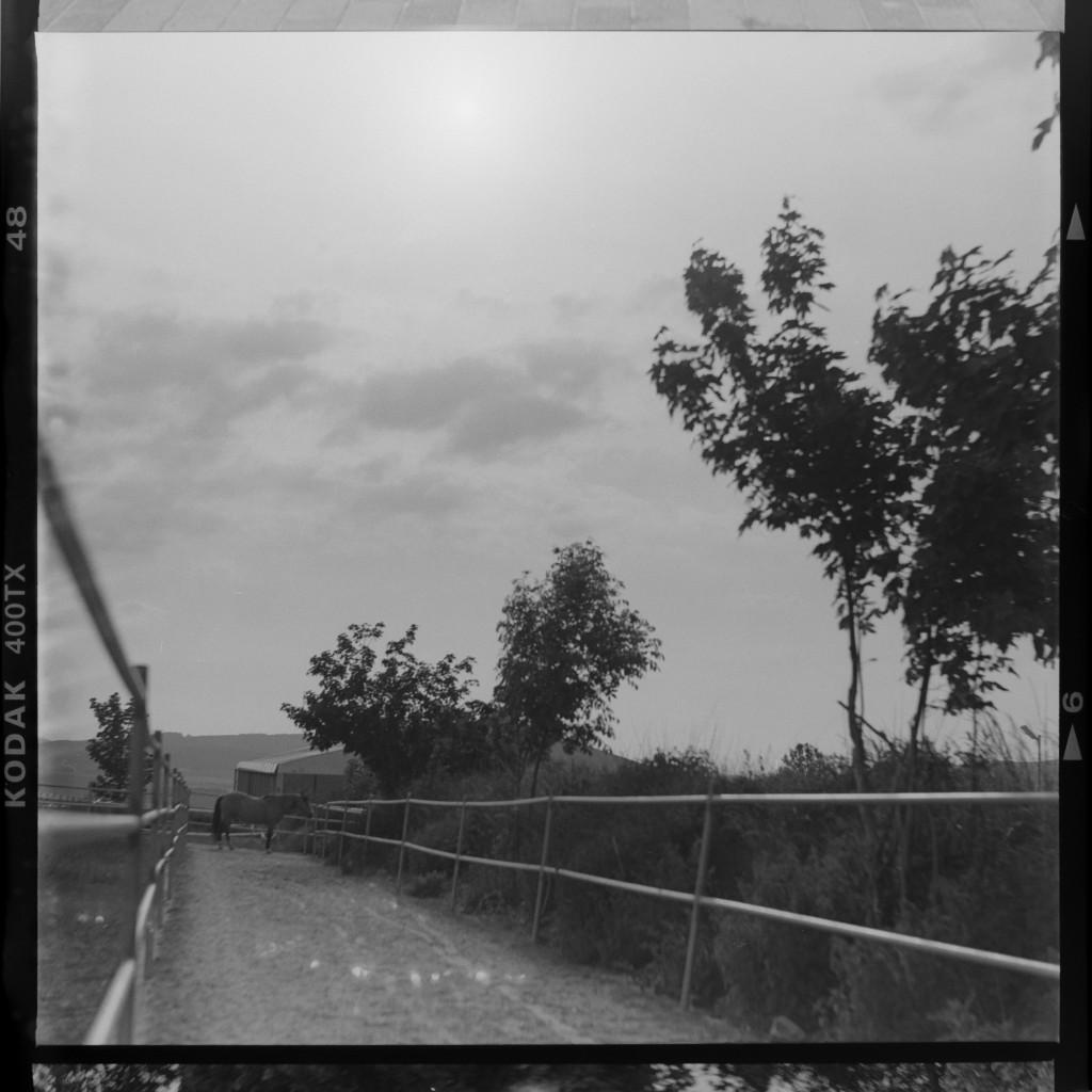 Kodak Tri-X 400 – Erster Test für den Dynamik-Umfang. Negativ abfotografiert und ins Positiv konvertiert. Sonst keine Bearbeitung