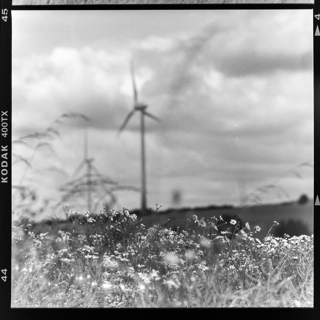 Ins Feld – Aufgenommen auf Kodak Tri-X 400 mit Primar Reflex II und Tessar 16,5 cm