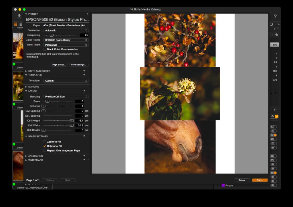 Capture One Pro 8 – Drucken, drei Bilder untereinander