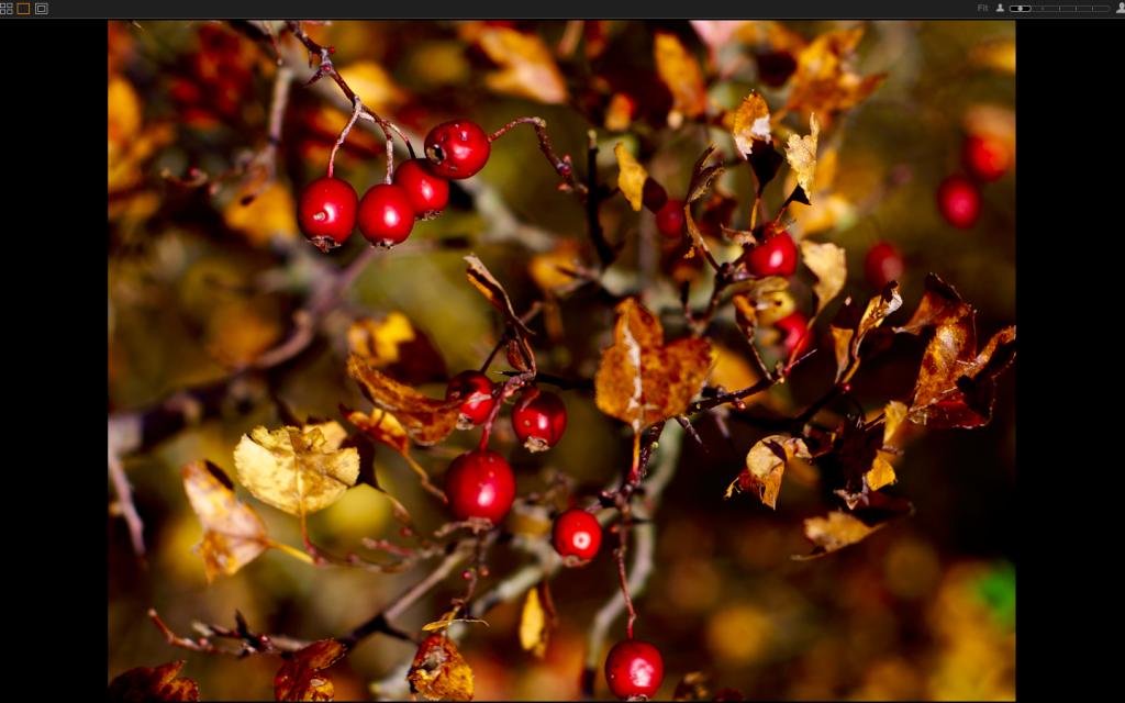 Capture One Pro 8 – Slideshow zeigt eine Toolzeile – warum?