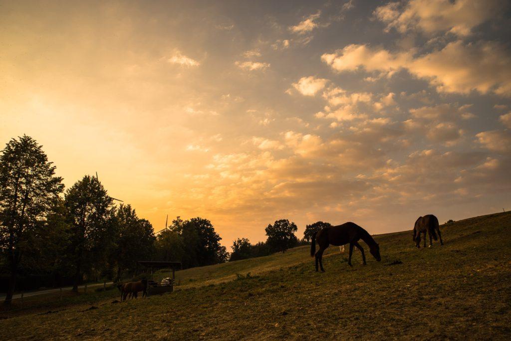 Pferde im Sonnenuntergang auf der Weide